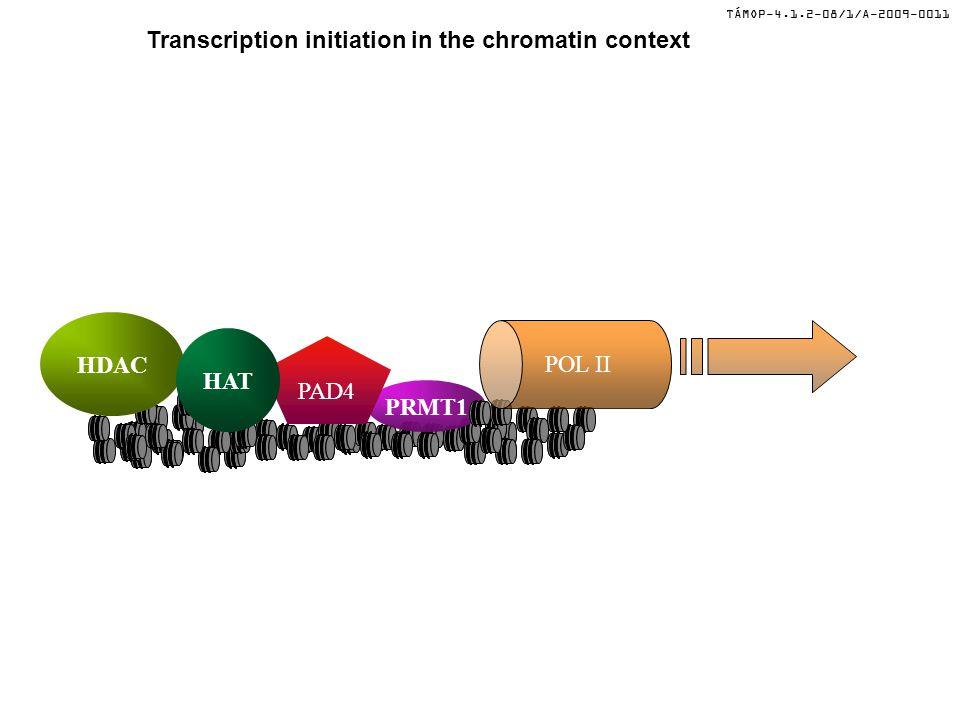 TÁMOP-4.1.2-08/1/A-2009-0011 Transcription initiation in the chromatin context LSD1 ?