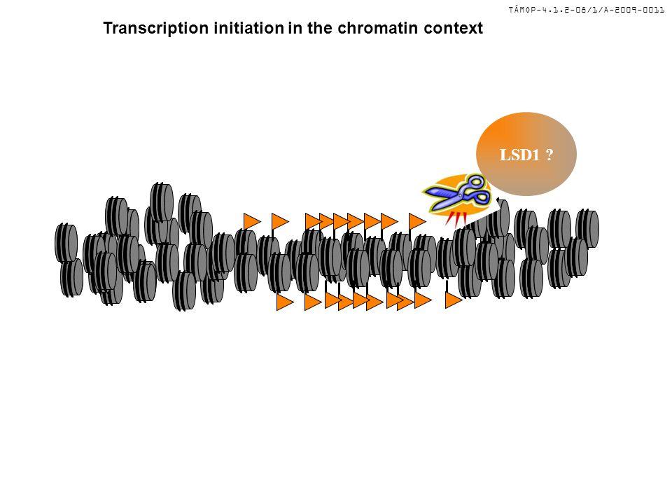 TÁMOP-4.1.2-08/1/A-2009-0011 Transcription initiation in the chromatin context LSD1 ? PRMT1