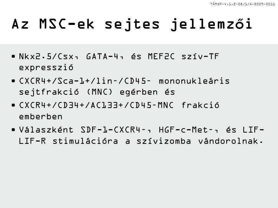TÁMOP-4.1.2-08/1/A-2009-0011 Az MSC-ek sejtes jellemzői Nkx2.5/Csx, GATA-4, és MEF2C szív-TF expresszió CXCR4+/Sca-1+/lin–/CD45– mononukleáris sejtfra