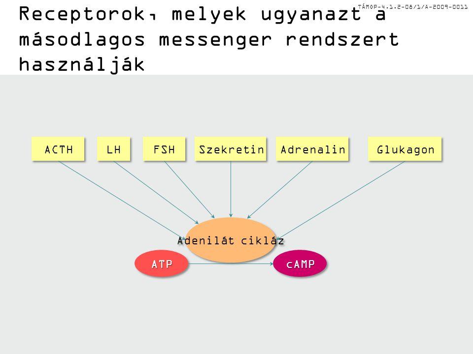 TÁMOP-4.1.2-08/1/A-2009-0011 Receptorok, melyek ugyanazt a másodlagos messenger rendszert használják Glukagon Szekretin Adrenalin ACTH LH FSH Adenilát cikláz ATPATPcAMPcAMP