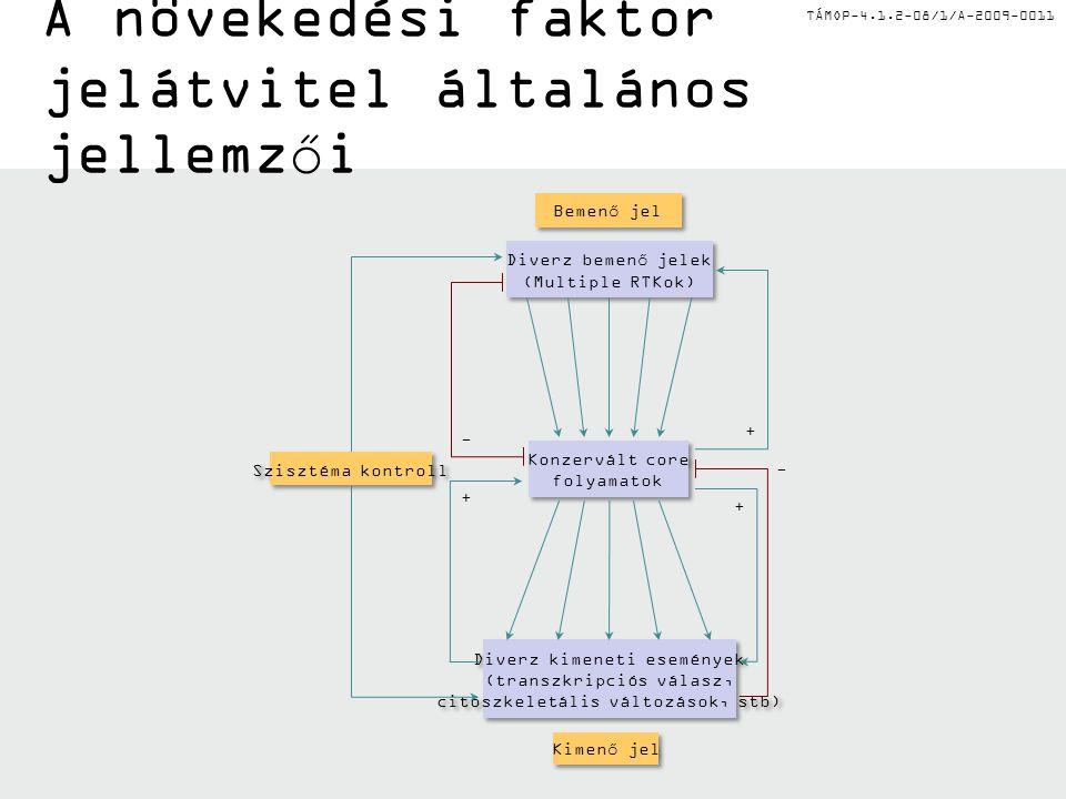 TÁMOP-4.1.2-08/1/A-2009-0011 EGF jelátvitel és mutációk P P P P P P P P SOS Erk GRB2 Ras bRaf PI3K3R1 PI3K3CA Akt mTOR PTEN PLC  PLC  PKC JAK STAT1/3 RAS-independens K-RAS mutáció az EGFR- útvonal 75%-át befolyásolja B-RAF mutáció: 1/4 EGFR- útvonal PTEN mutáció: 1/4 EGFR- útvonal PI3K mutáció: 1/4 EGFR- útvonal EGFR