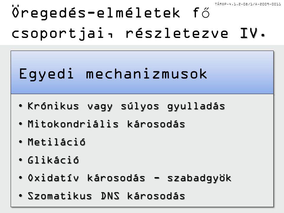 TÁMOP-4.1.2-08/1/A-2009-0011 IV. Öregedés-elméletek fő csoportjai, részletezve IV. Egyedi mechanizmusok Krónikus vagy súlyos gyulladásKrónikus vagy sú