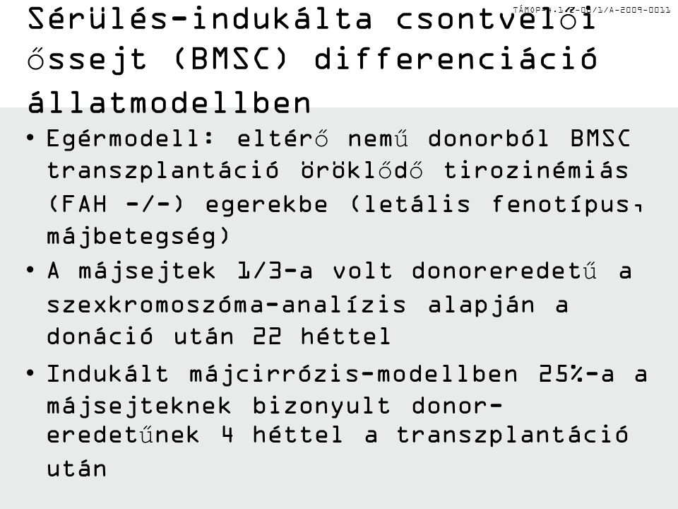 TÁMOP-4.1.2-08/1/A-2009-0011 Sérülés-indukálta csontvelői őssejt (BMSC) differenciáció állatmodellben Egérmodell: eltérő nemű donorból BMSC transzplantáció öröklődő tirozinémiás (FAH -/-) egerekbe (letális fenotípus, májbetegség) A májsejtek 1/3-a volt donoreredetű a szexkromoszóma-analízis alapján a donáció után 22 héttel Indukált májcirrózis-modellben 25%-a a májsejteknek bizonyult donor- eredetűnek 4 héttel a transzplantáció után