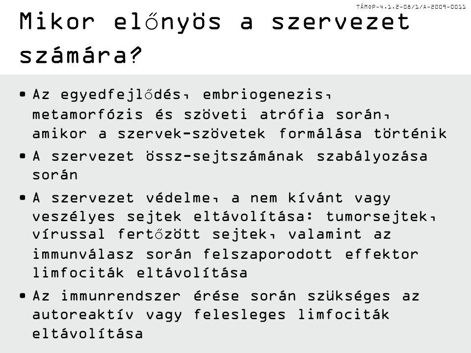 TÁMOP-4.1.2-08/1/A-2009-0011 Mikor előnyös a szervezet számára.