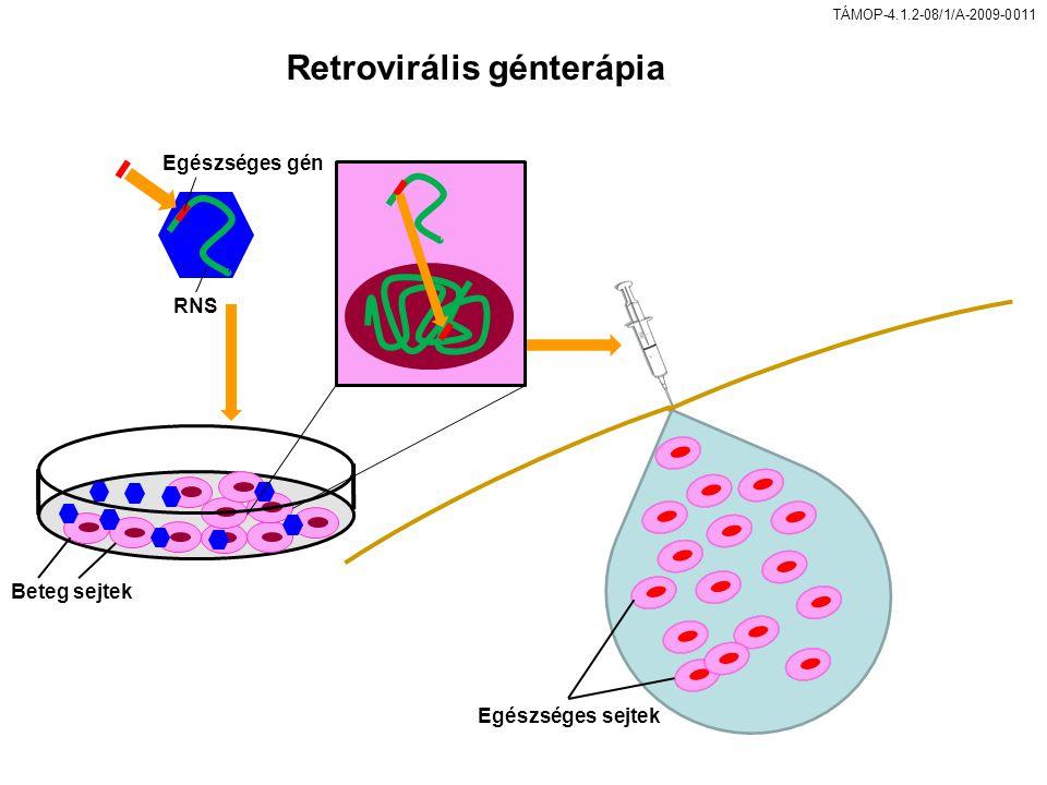 TÁMOP-4.1.2-08/1/A-2009-0011 Retrovirális génterápia Beteg sejtek RNS Egészséges gén Egészséges sejtek