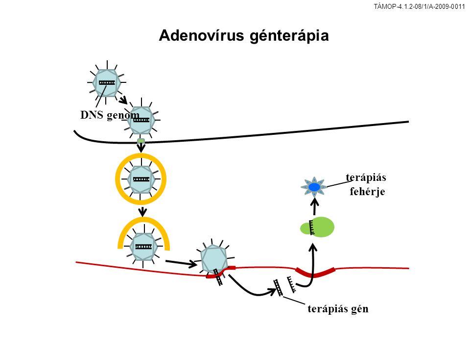 TÁMOP-4.1.2-08/1/A-2009-0011 DNS genom terápiás fehérje terápiás gén Adenovírus génterápia