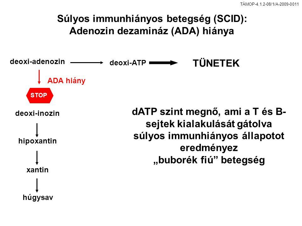 """TÁMOP-4.1.2-08/1/A-2009-0011 Súlyos immunhiányos betegség (SCID): Adenozin dezamináz (ADA) hiánya dATP szint megnő, ami a T és B- sejtek kialakulását gátolva súlyos immunhiányos állapotot eredményez """"buborék fiú betegség deoxi-adenozin deoxi-ATP ADA hiány deoxi-inozin hipoxantin xantin húgysav TÜNETEK STOP"""