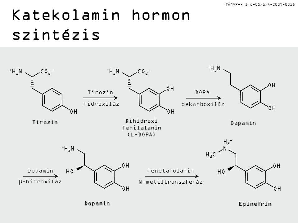 TÁMOP-4.1.2-08/1/A-2009-0011 Katekolamin hormon szintézis CO 2 – +H3N+H3N OH Tirozin Tirozin hidroxiláz CO 2 – +H3N+H3N OH Dihidroxi fenilalanin (L-DOPA) OH DOPA dekarboxiláz Dopamin +H3N+H3N OH Dopamin β -hidroxiláz Dopamin +H3N+H3N OH HO Fenetanolamin N-metiltranszferáz Epinefrin N OH HO H2+H2+ H3CH3C