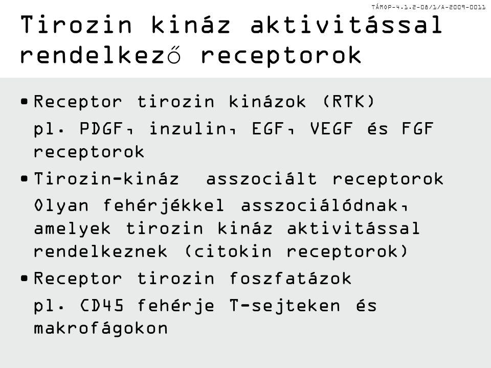 TÁMOP-4.1.2-08/1/A-2009-0011 Tirozin kináz aktivitással rendelkező receptorok Receptor tirozin kinázok (RTK) pl.