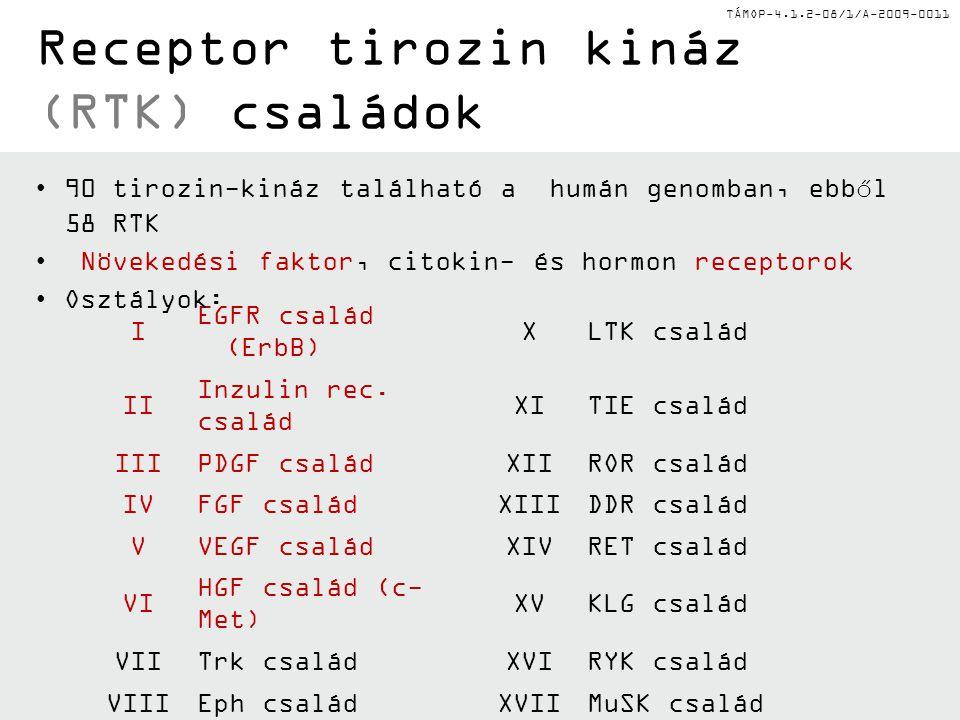 TÁMOP-4.1.2-08/1/A-2009-0011 Kináz-foszfatáz egyensúly Foszforiláz kináz (szerin/treoninkináz) PP1c (szerin/treonin foszfatáz) Foszforiláz b Foszforiláz a P P InaktívAktív P ATPADP CD45 (tirozin foszfatáz) Csk (tirozin kináz) ADPATP Inaktív p56 Lck P Y505 Y394 Foszforilálatlan p56 Lck Y505 Y394 Aktív p56 Lck P Y394 P