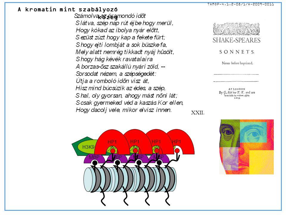 A kromatin mint szabályozó közeg TÁMOP-4.1.2-08/1/A-2009-0011 MBP H3K9 MET HP1 MBP H3K9 MET HP1 MBP H3K9 MET HP1 MBP H3K9 MET HP1 XXII.