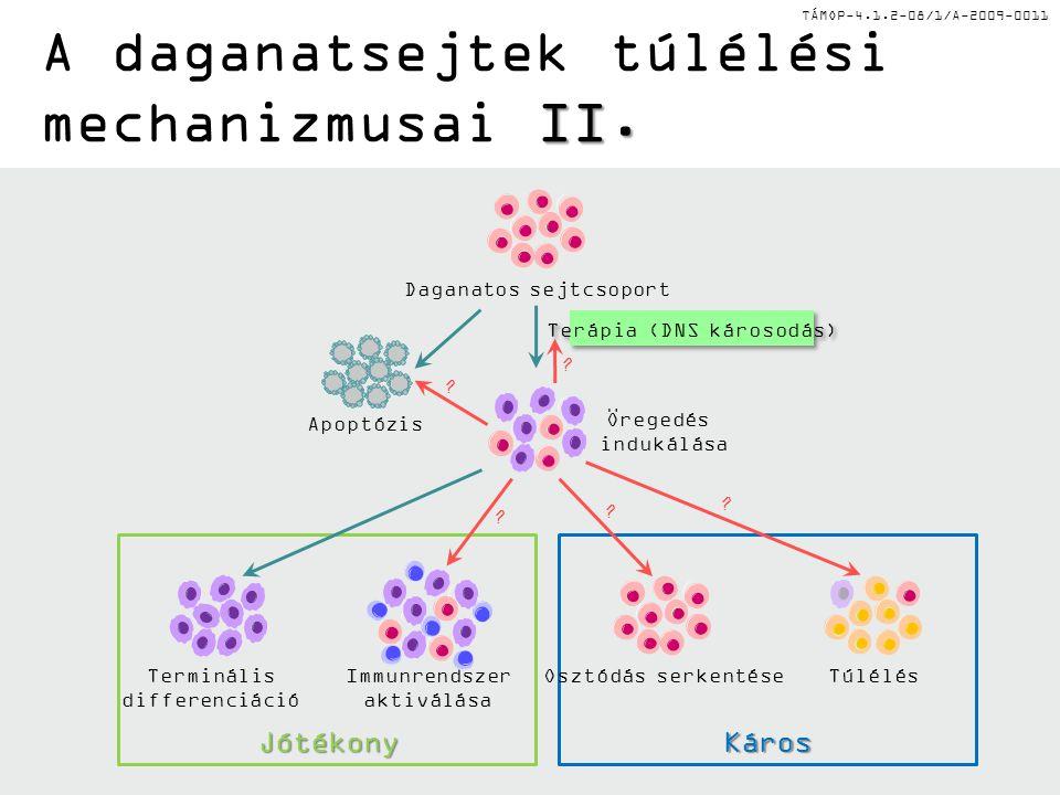 TÁMOP-4.1.2-08/1/A-2009-0011 Apoptózis Öregedés indukálása Daganatos sejtcsoport Terápia (DNS károsodás) Terminális differenciáció Immunrendszer aktiv