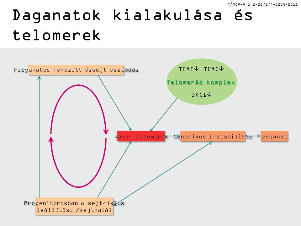 TÁMOP-4.1.2-08/1/A-2009-0011 Daganat Genomikus instabilitás Telomeráz komplex TERT  TERC  DKC1  Folyamatos fokozott őssejt osztódás Progenitorokban
