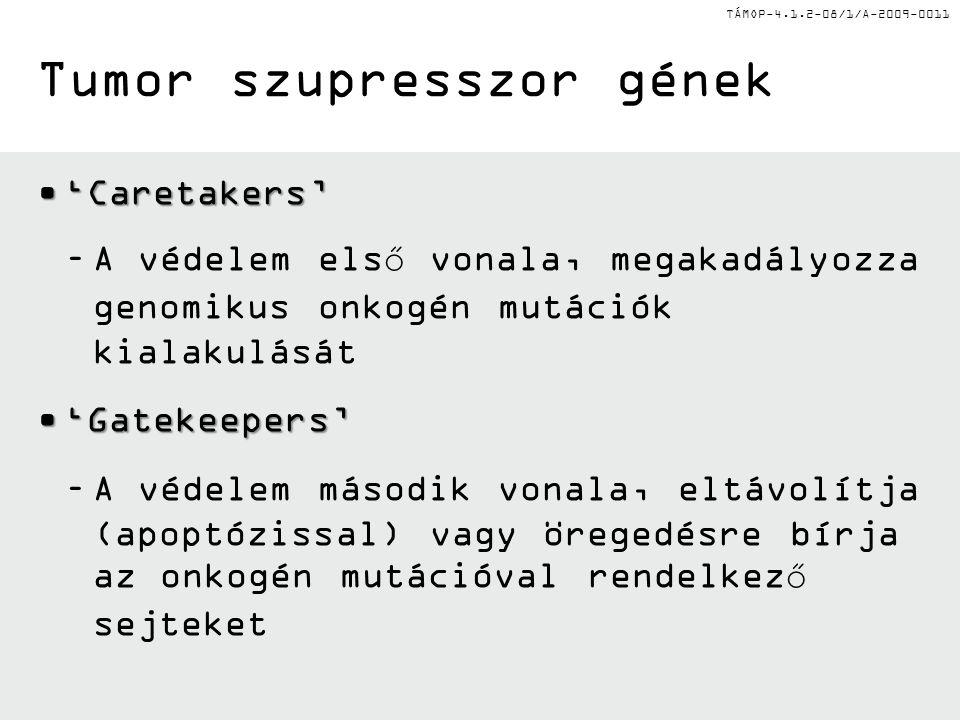 TÁMOP-4.1.2-08/1/A-2009-0011 'Caretakers''Caretakers' –A védelem első vonala, megakadályozza genomikus onkogén mutációk kialakulását 'Gatekeepers''Gat