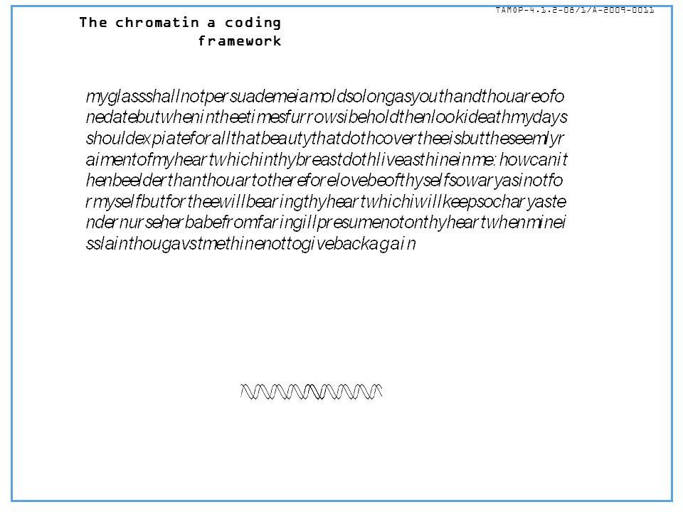 The chromatin a coding framework TÁMOP-4.1.2-08/1/A-2009-0011