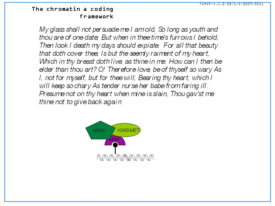 The chromatin a coding framework TÁMOP-4.1.2-08/1/A-2009-0011 MBP H3K9 MET HDAC