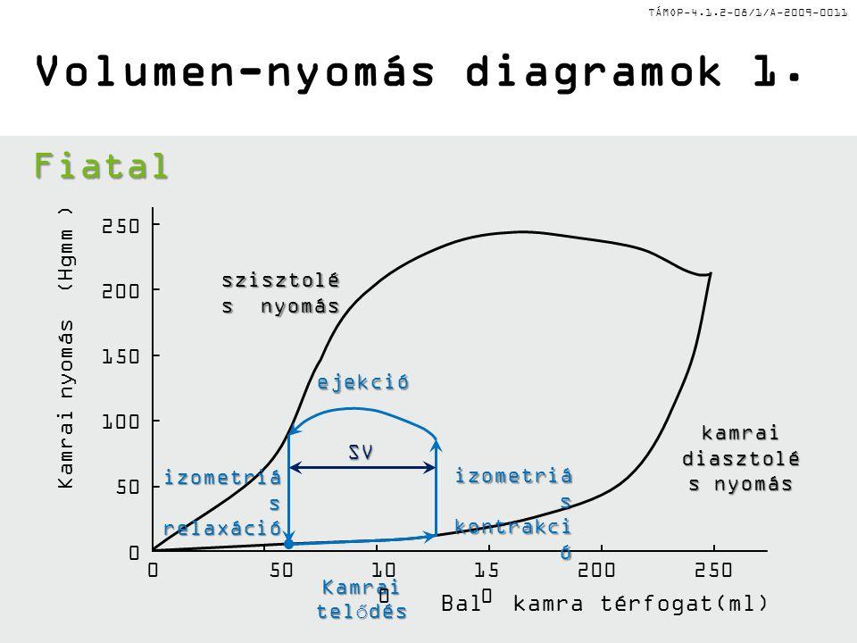 TÁMOP-4.1.2-08/1/A-2009-0011 Bal kamra térfogat(ml) Kamrai telődés izometriá s kontrakci ó ejekció izometriá s relaxáció szisztolé s nyomás kamrai diasztolé s nyomás Volumen-nyomás diagramok 1.