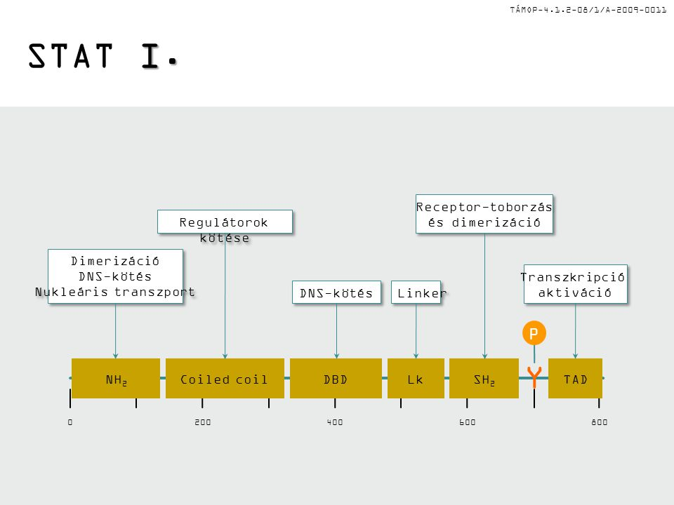 TÁMOP-4.1.2-08/1/A-2009-0011 I. STAT I. NH 2 Coiled coilDBDLkSH 2 TAD Y P 0200400600800 DNS-kötés Transzkripció aktiváció Transzkripció aktiváció Link