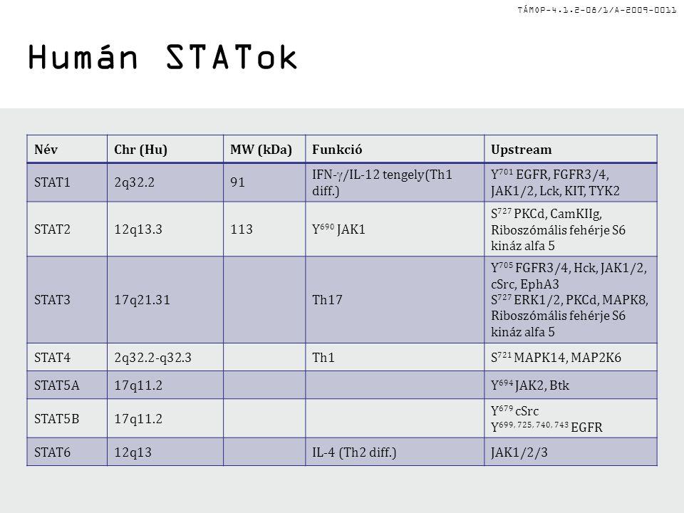 TÁMOP-4.1.2-08/1/A-2009-0011 Humán STATok NévChr (Hu)MW (kDa)FunkcióUpstream STAT12q32.291 IFN-  /IL-12 tengely(Th1 diff.) Y 701 EGFR, FGFR3/4, JAK1/2, Lck, KIT, TYK2 STAT212q13.3113Y 690 JAK1 S 727 PKCd, CamKIIg, Riboszómális fehérje S6 kináz alfa 5 STAT317q21.31Th17 Y 705 FGFR3/4, Hck, JAK1/2, cSrc, EphA3 S 727 ERK1/2, PKCd, MAPK8, Riboszómális fehérje S6 kináz alfa 5 STAT42q32.2-q32.3Th1S 721 MAPK14, MAP2K6 STAT5A17q11.2Y 694 JAK2, Btk STAT5B17q11.2 Y 679 cSrc Y 699, 725, 740, 743 EGFR STAT612q13IL-4 (Th2 diff.)JAK1/2/3