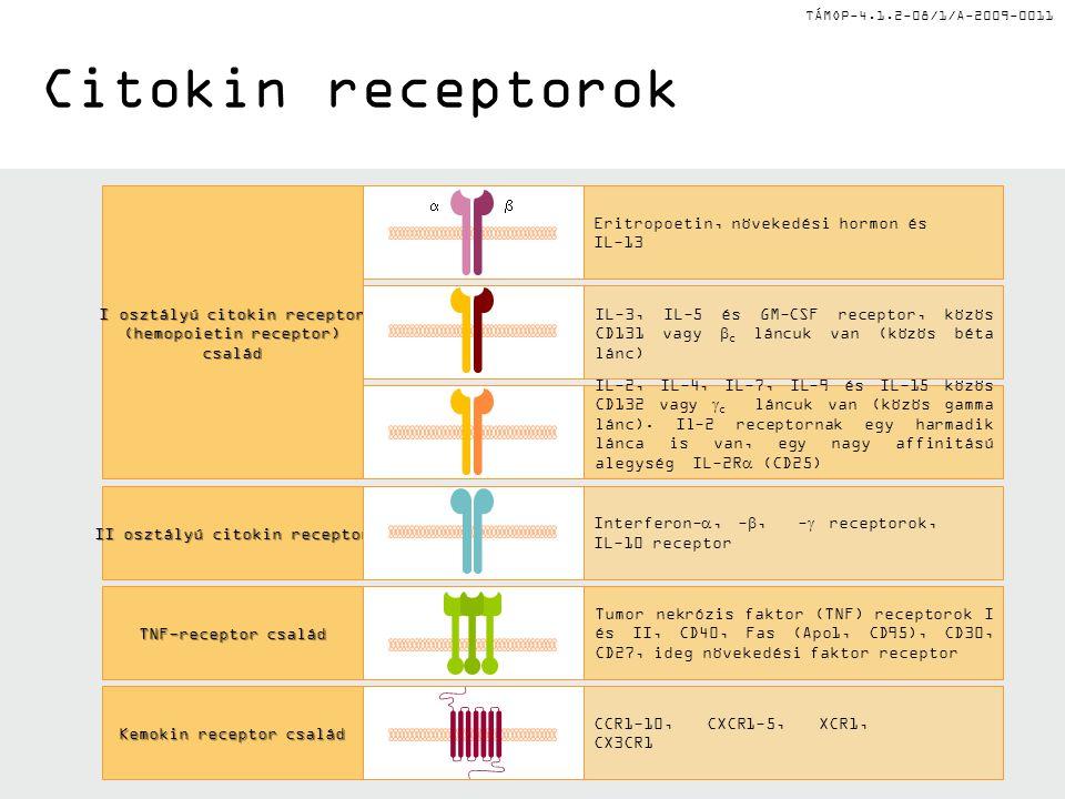 TÁMOP-4.1.2-08/1/A-2009-0011 Citokin receptorok Interferon- , - , -  receptorok, IL-10 receptor Tumor nekrózis faktor (TNF) receptorok I és II, CD40, Fas (Apo1, CD95), CD30, CD27, ideg növekedési faktor receptor CCR1-10, CXCR1-5, XCR1, CX3CR1 IL-2, IL-4, IL-7, IL-9 és IL-15 közös CD132 vagy  c láncuk van (közös gamma lánc).