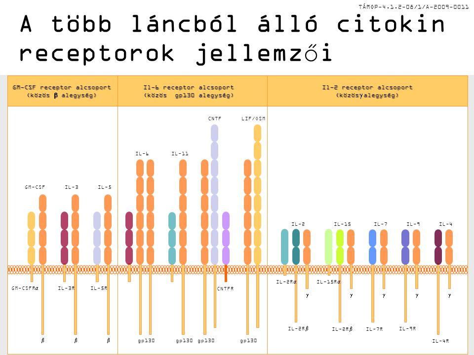 TÁMOP-4.1.2-08/1/A-2009-0011 A több láncból álló citokin receptorok jellemzői gp130 LIF/OSM IL-6 gp130 IL-11 gp130 CNTF CNTFR gp130 GM-CSFR  GM-CSF 