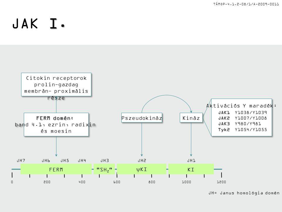 TÁMOP-4.1.2-08/1/A-2009-0011 I. JAK I.