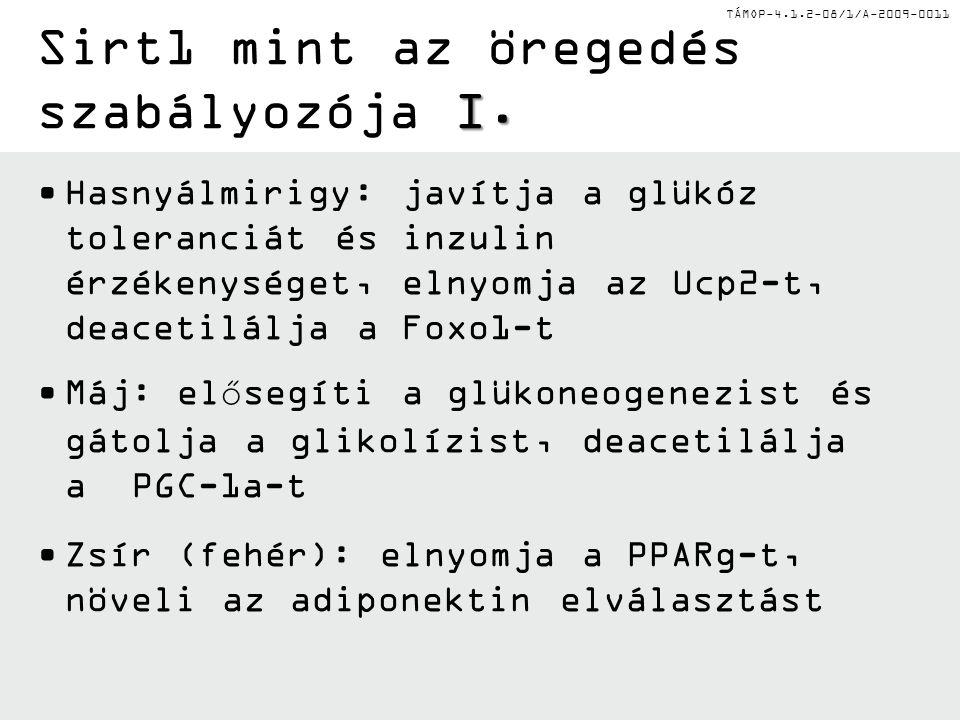 TÁMOP-4.1.2-08/1/A-2009-0011 Hasnyálmirigy: javítja a glükóz toleranciát és inzulin érzékenységet, elnyomja az Ucp2-t, deacetilálja a Foxo1-t Máj: elősegíti a glükoneogenezist és gátolja a glikolízist, deacetilálja a PGC-1a-t Zsír (fehér): elnyomja a PPARg-t, növeli az adiponektin elválasztást I.