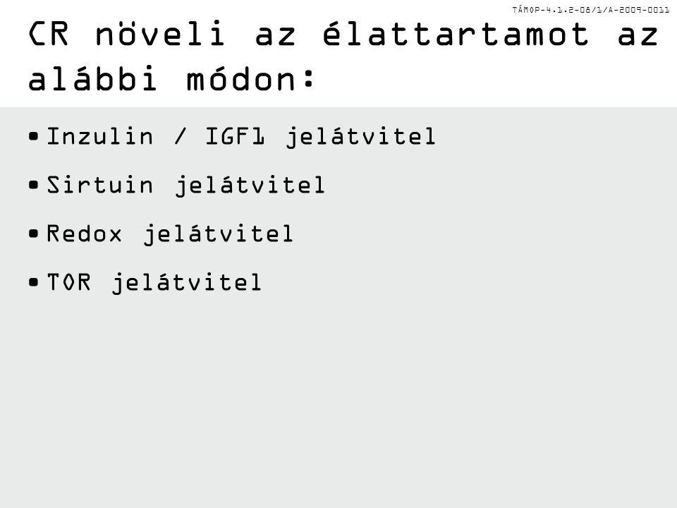 TÁMOP-4.1.2-08/1/A-2009-0011 Inzulin / IGF1 jelátvitel Sirtuin jelátvitel Redox jelátvitel TOR jelátvitel CR növeli az élattartamot az alábbi módon: