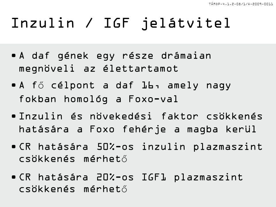 TÁMOP-4.1.2-08/1/A-2009-0011 A daf gének egy része drámaian megnöveli az élettartamot A fő célpont a daf 16, amely nagy fokban homológ a Foxo-val Inzulin és növekedési faktor csökkenés hatására a Foxo fehérje a magba kerül CR hatására 50%-os inzulin plazmaszint csökkenés mérhető CR hatására 20%-os IGF1 plazmaszint csökkenés mérhető Inzulin / IGF jelátvitel