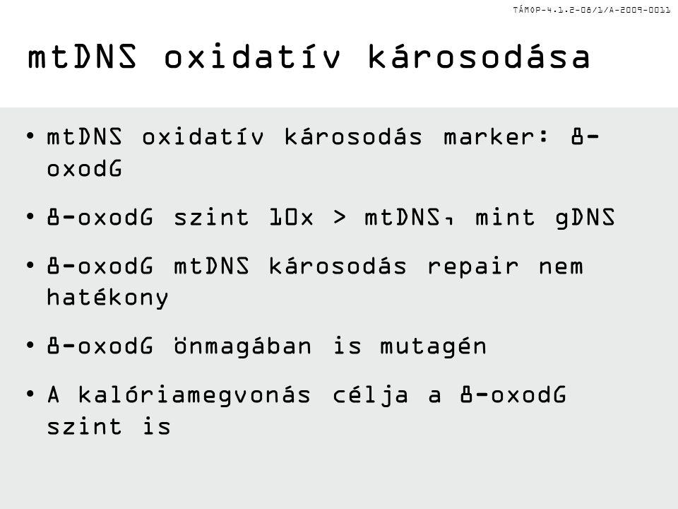 TÁMOP-4.1.2-08/1/A-2009-0011 mtDNS oxidatív károsodás marker: 8- oxodG 8-oxodG szint 10x > mtDNS, mint gDNS 8-oxodG mtDNS károsodás repair nem hatékon