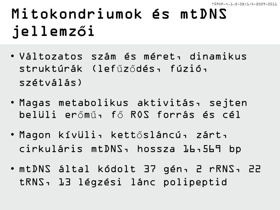 TÁMOP-4.1.2-08/1/A-2009-0011ATPATP Oxidatív foszforiláció rendszer Hiányos elektron- transzport lánc Hiányos elektron- transzport lánc mtDNS mutáció mtDNS által kódolt elemek mtDNS ∙OH NADH, FADH 2 Lánctörés Bázismódosulá s Lánctörés Bázismódosulá s Hiányos mtDNS által kódolt elemek Hiányos mtDNS által kódolt elemek H 2 O + ½ O 2 CAT 2 H 2 O GPX 2 GSH GSSG O2∙O2∙ SOD H2O2H2O2 O2O2 Elektronszivárgás Lipid peroxidáció Fehérje oxidáció Lipid peroxidáció Fehérje oxidáció + H2OH2O Ördögi kör Fentonreakció Energiahiá ny Öregedés és mitokondriális betegségek Külső membrán Belsőmembrán Magi DNS által kódolt elemek Mitokondrium Mitokondriális ROS termelődés
