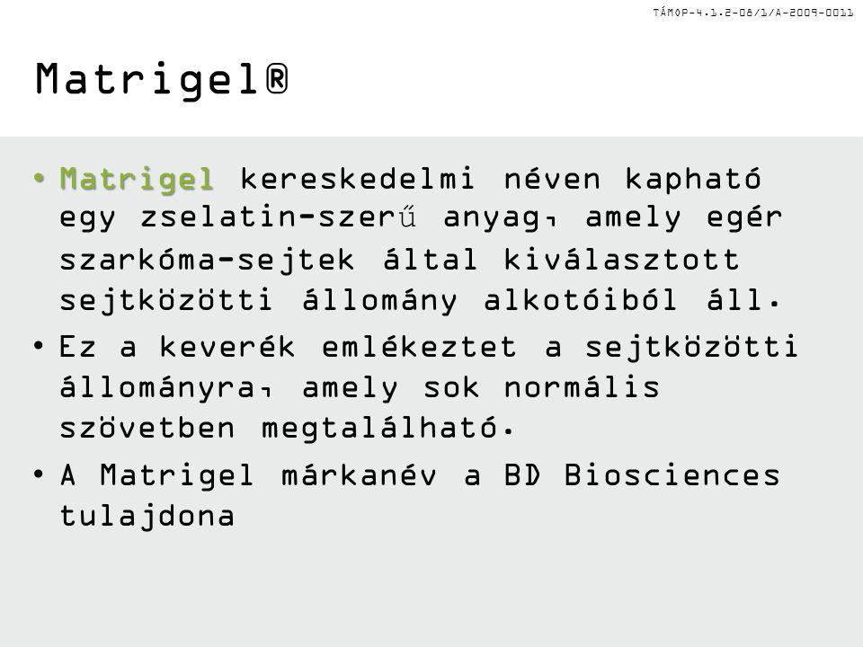 TÁMOP-4.1.2-08/1/A-2009-0011 Matrigel® MatrigelMatrigel kereskedelmi néven kapható egy zselatin-szerű anyag, amely egér szarkóma-sejtek által kiválasztott sejtközötti állomány alkotóiból áll.