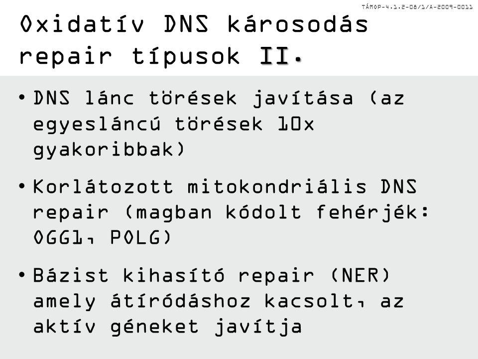 TÁMOP-4.1.2-08/1/A-2009-0011 DNS lánc törések javítása (az egyesláncú törések 10x gyakoribbak) Korlátozott mitokondriális DNS repair (magban kódolt fe