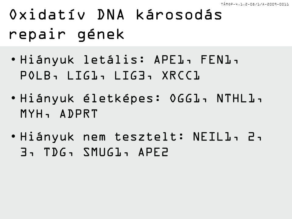 TÁMOP-4.1.2-08/1/A-2009-0011 Hiányuk letális: APE1, FEN1, POLB, LIG1, LIG3, XRCC1 Hiányuk életképes: OGG1, NTHL1, MYH, ADPRT Hiányuk nem tesztelt: NEI