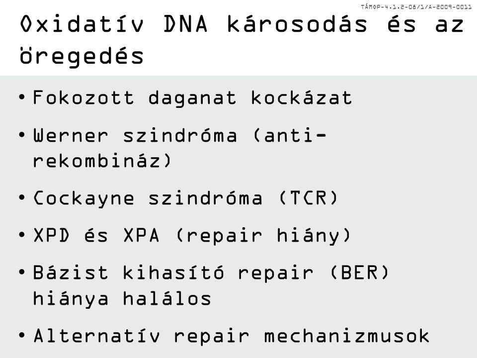 TÁMOP-4.1.2-08/1/A-2009-0011 Fokozott daganat kockázat Werner szindróma (anti- rekombináz) Cockayne szindróma (TCR) XPD és XPA (repair hiány) Bázist k