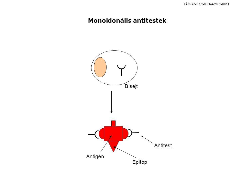 B sejt Antigén Epitóp Antitest Monoklonális antitestek TÁMOP-4.1.2-08/1/A-2009-0011