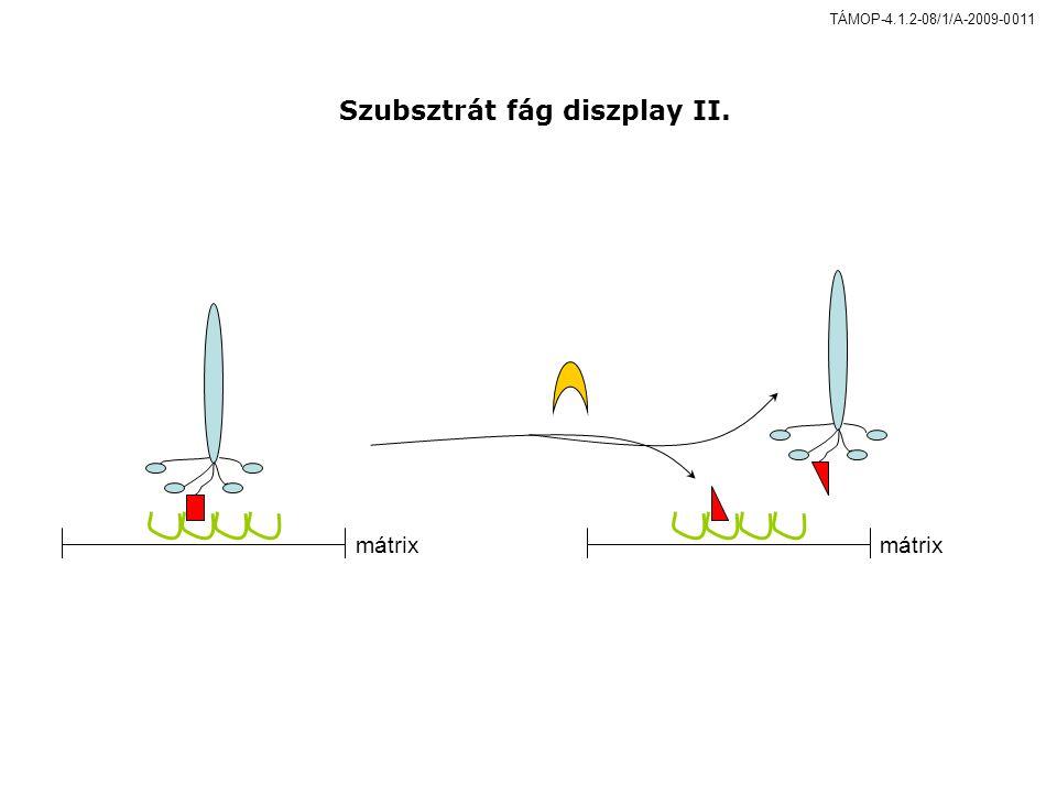 mátrix Szubsztrát fág diszplay II. TÁMOP-4.1.2-08/1/A-2009-0011