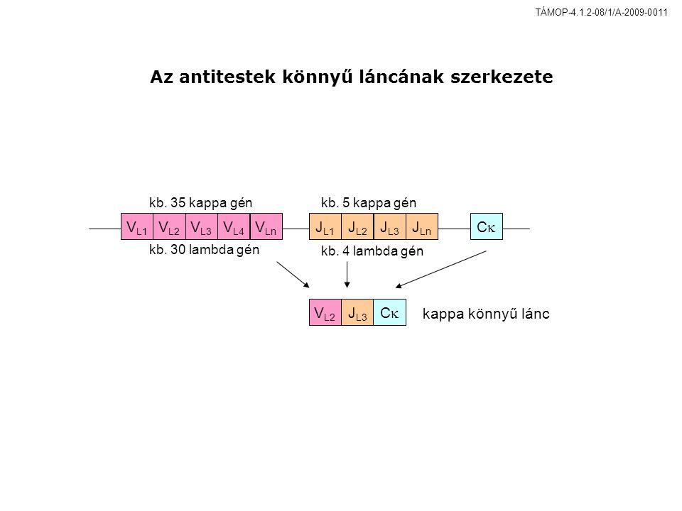 VL1VL1 VL2VL2 VLnVLn VL4VL4 VL3VL3 JL1JL1 CC JLnJLn JL3JL3 JL2JL2 JL3JL3 VL2VL2 CC kappa könnyű lánc kb.