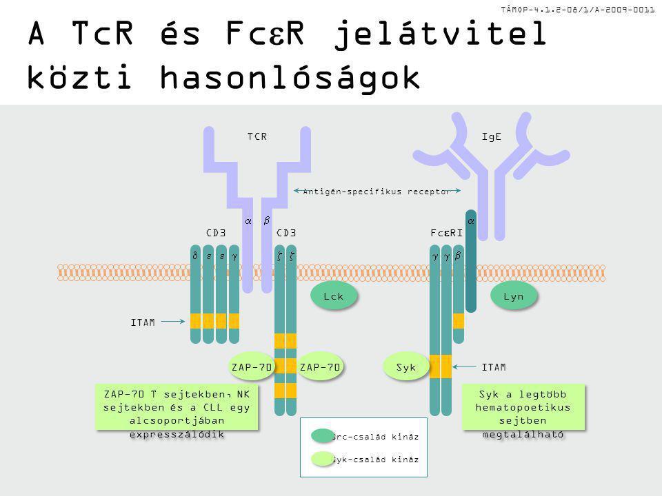 TÁMOP-4.1.2-08/1/A-2009-0011 A TcR és Fc  R jelátvitel közti hasonlóságok Lyn Lck   IgE ITAM Fc  RI Antigén-specifikus receptor Src-család kináz Syk-család kináz ZAP-70 T sejtekben, NK sejtekben és a CLL egy alcsoportjában expresszálódik Syk a legtöbb hematopoetikus sejtben megtalálható TCR CD3   ITAM Syk ZAP-70