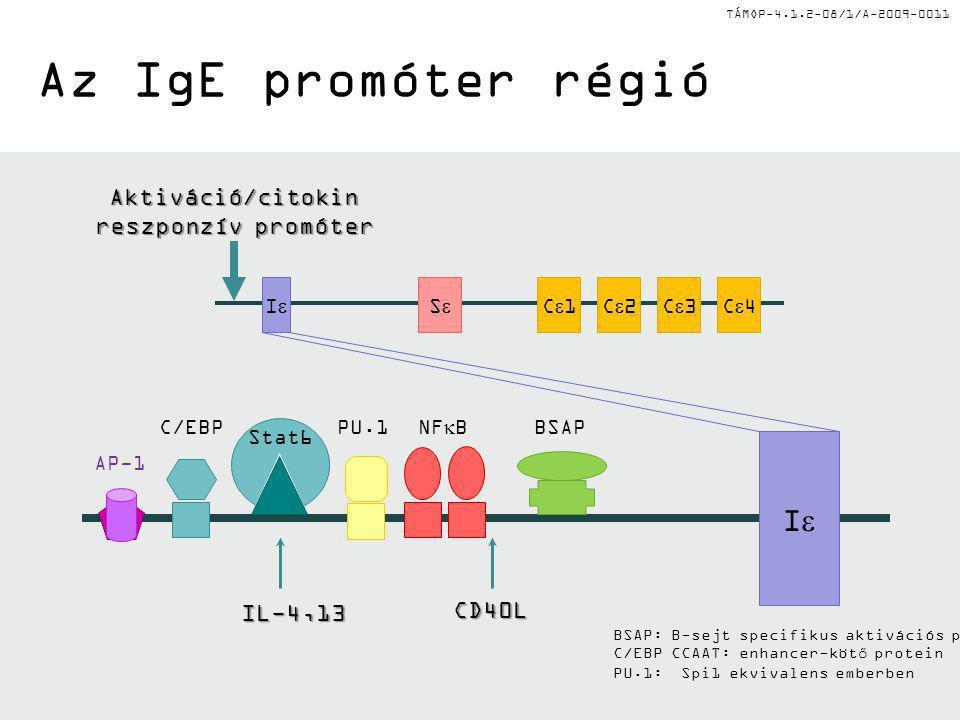 TÁMOP-4.1.2-08/1/A-2009-0011 Az IgE promóter régió II C1C1C2C2C3C3C4C4SS II NF  B Stat6 C/EBPPU.1BSAP AP-1 Aktiváció/citokin reszponzív promóter IL-4,13 CD40L BSAP: B-sejt specifikus aktivációs protein C/EBP CCAAT: enhancer-kötő protein PU.1: Spi1 ekvivalens emberben
