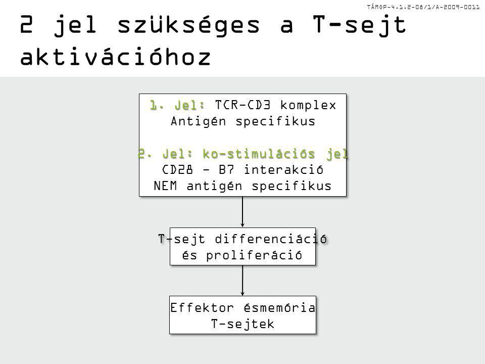 TÁMOP-4.1.2-08/1/A-2009-0011 2 jel szükséges a T-sejt aktivációhoz 1. Jel: 1. Jel: TCR-CD3 komplex Antigén specifikus 2. Jel: ko-stimulációs jel CD28