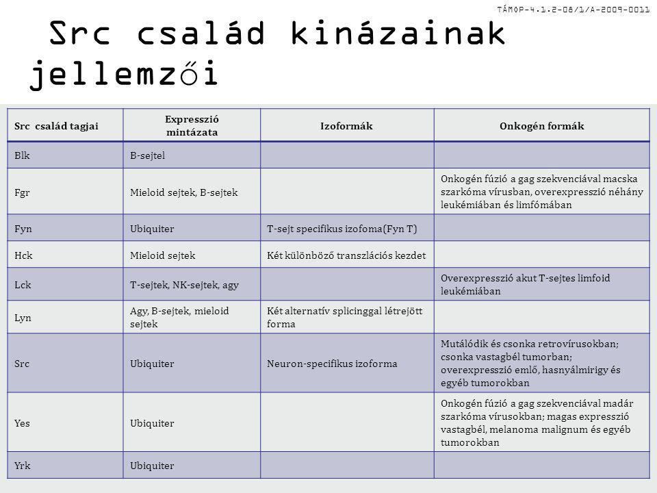 TÁMOP-4.1.2-08/1/A-2009-0011 Src család kinázainak jellemzői Src család tagjai Expresszió mintázata IzoformákOnkogén formák BlkB-sejtel FgrMieloid sej