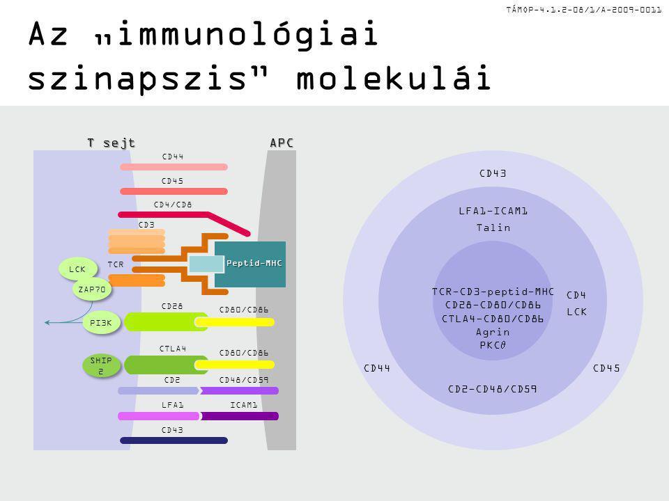 """TÁMOP-4.1.2-08/1/A-2009-0011 Az """"immunológiai szinapszis"""" molekulái CD43 CD44CD45 TCR-CD3-peptid-MHC CD28-CD80/CD86 CTLA4-CD80/CD86 Agrin PKC  CD4 LC"""
