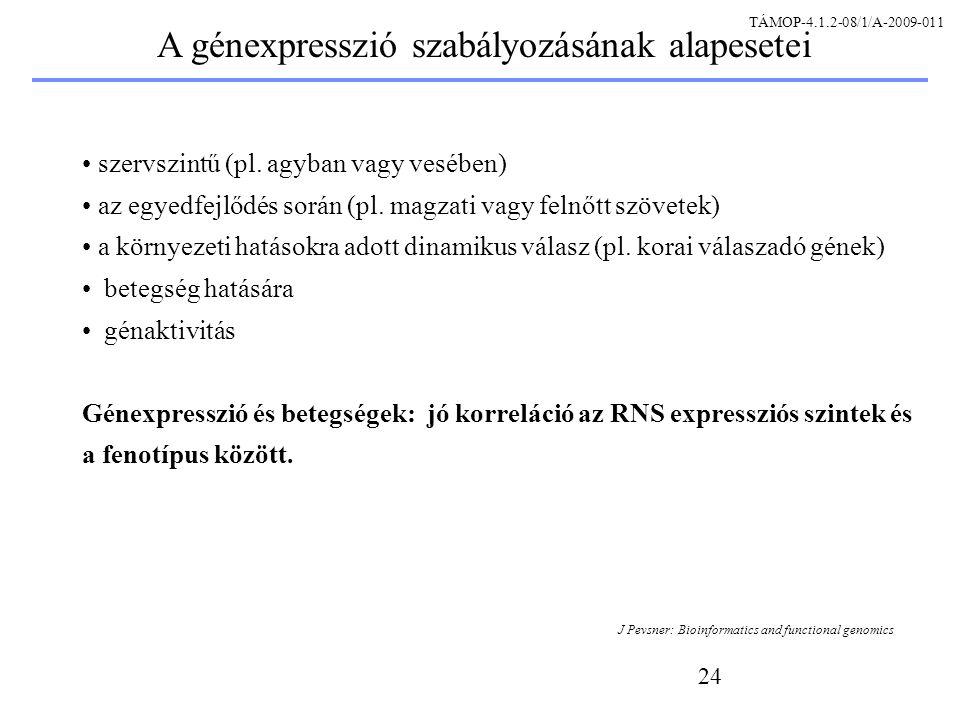24 szervszintű (pl. agyban vagy vesében) az egyedfejlődés során (pl.