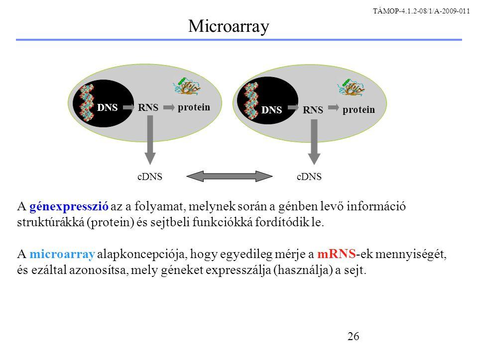 26 A génexpresszió az a folyamat, melynek során a génben levő információ struktúrákká (protein) és sejtbeli funkciókká fordítódik le.