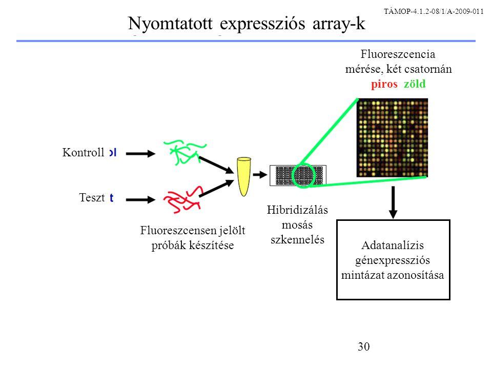 30 Kontroll Teszt Fluoreszcensen jelölt próbák készítése Hibridizálás mosás szkennelés Fluoreszcencia mérése, két csatornán piros zöld Adatanalízis génexpressziós mintázat azonosítása Nyomtatott expressziós array-k TÁMOP-4.1.2-08/1/A-2009-011