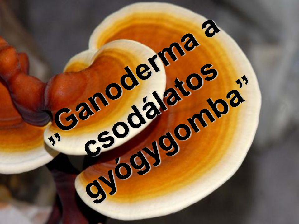 Ezer titkot rejtő csodagomba: Ganoderma Nem gyógyszer, nem csodaszer, mégis sokaknak hozott már gyógyulást a ganoderma vagy más néven pecsétviaszgomba, mely az ókori Keleten olyan értéknek számított, amiért képesek voltak csatákat vívni.