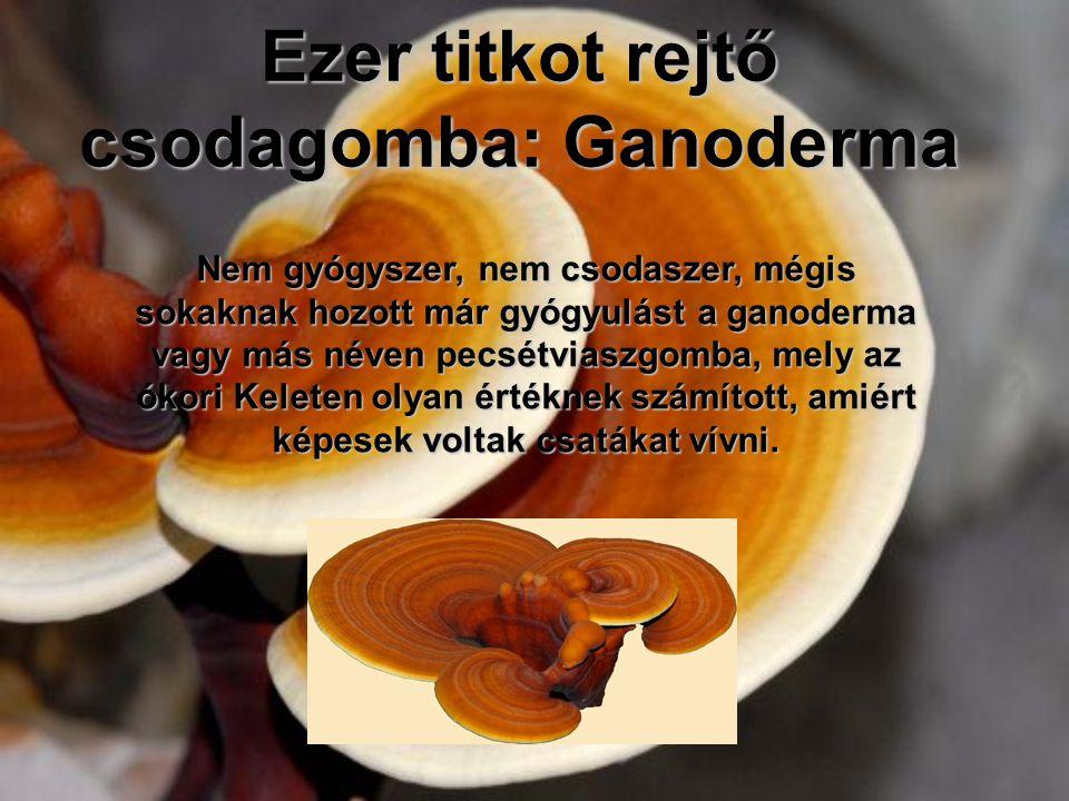 Ezer titkot rejtő csodagomba: Ganoderma Nem gyógyszer, nem csodaszer, mégis sokaknak hozott már gyógyulást a ganoderma vagy más néven pecsétviaszgomba