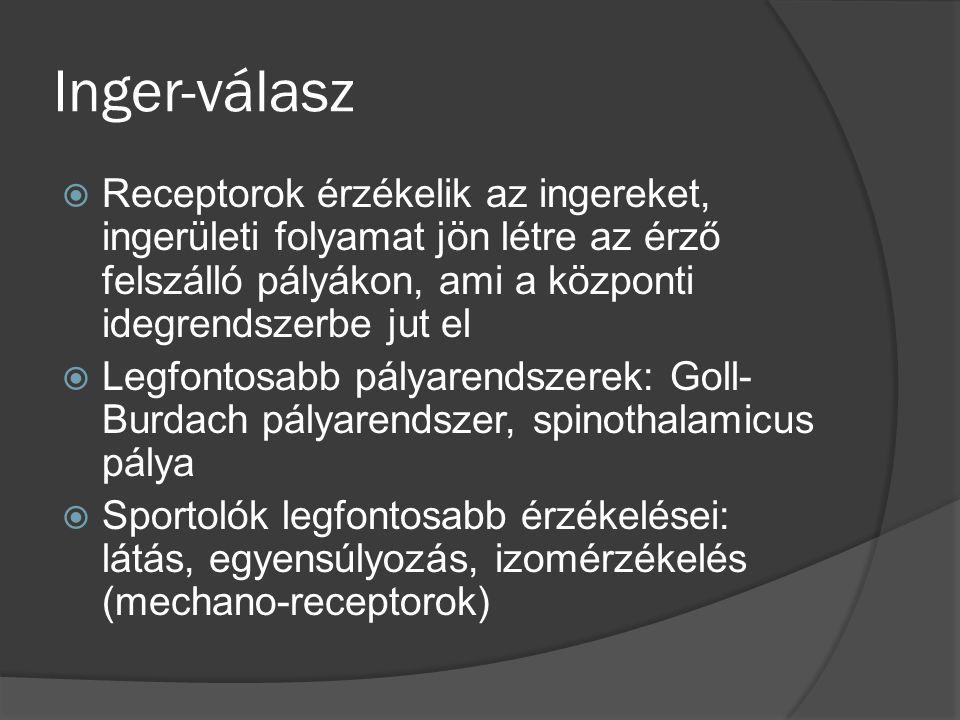 Inger-válasz  Receptorok érzékelik az ingereket, ingerületi folyamat jön létre az érző felszálló pályákon, ami a központi idegrendszerbe jut el  Legfontosabb pályarendszerek: Goll- Burdach pályarendszer, spinothalamicus pálya  Sportolók legfontosabb érzékelései: látás, egyensúlyozás, izomérzékelés (mechano-receptorok)