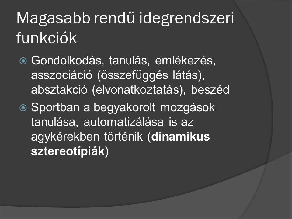 Magasabb rendű idegrendszeri funkciók  Gondolkodás, tanulás, emlékezés, asszociáció (összefüggés látás), absztakció (elvonatkoztatás), beszéd  Sport